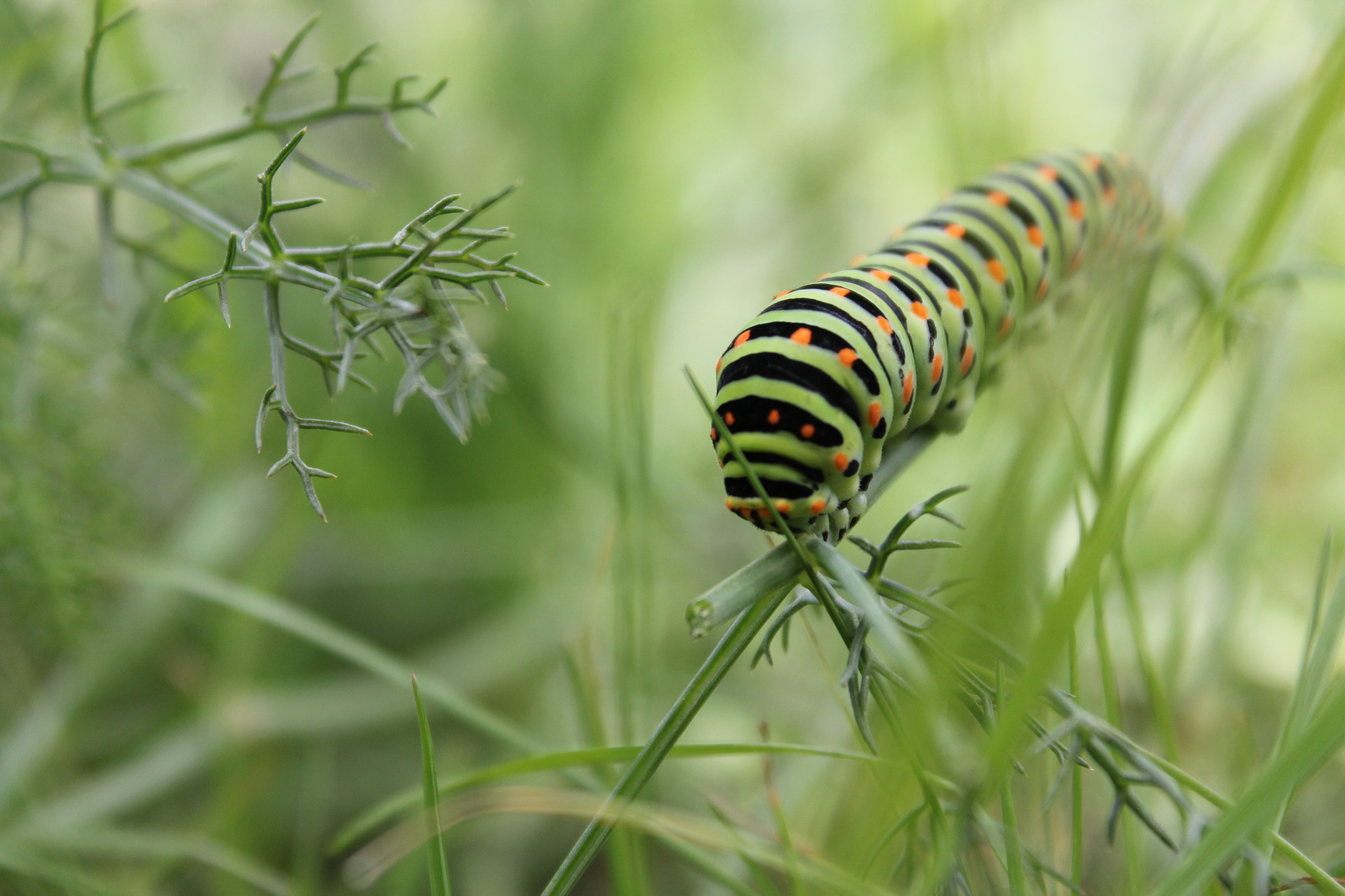 Photograph Caterpillar by Victoria Rodriguez on 500px