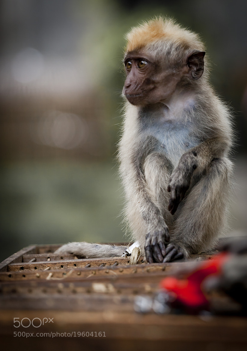 Photograph Mini Monkey by Olivier Martin on 500px