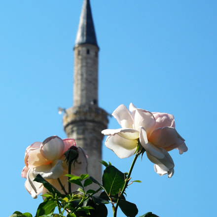 Rose with mosque, Nikon COOLPIX L610