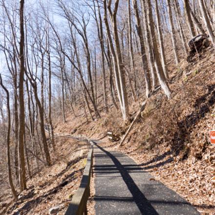 Amicalola Falls Hiking Trail