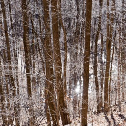 Trees at Amicalola Falls State Park