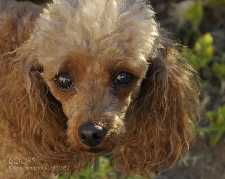 Photograph Dog Eyes by Stylish1Photography on 500px
