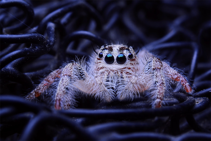 Photograph little spiderman by Tele Nicotin on 500px