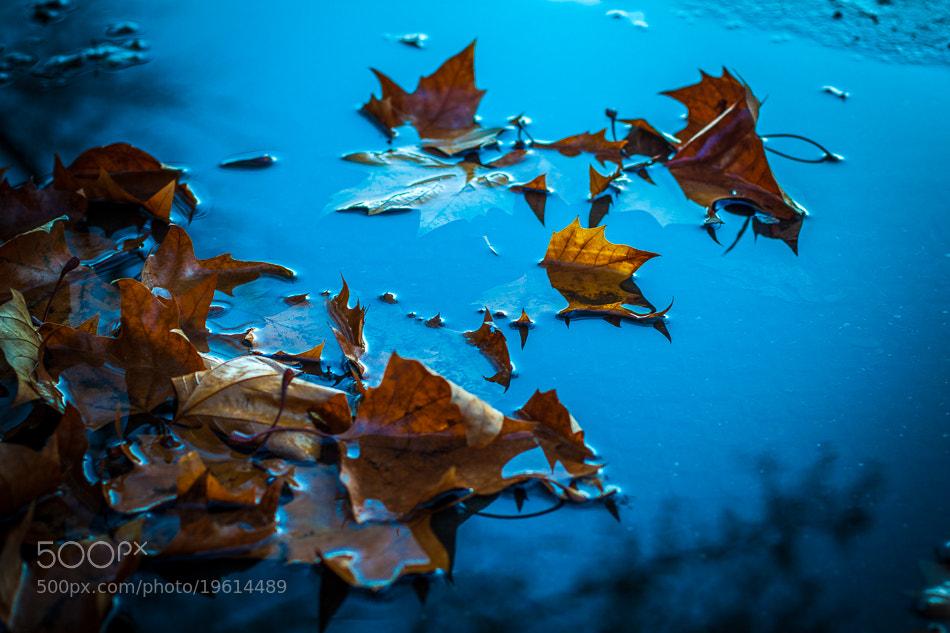 Photograph Fallen... by Nadim  Khalil on 500px
