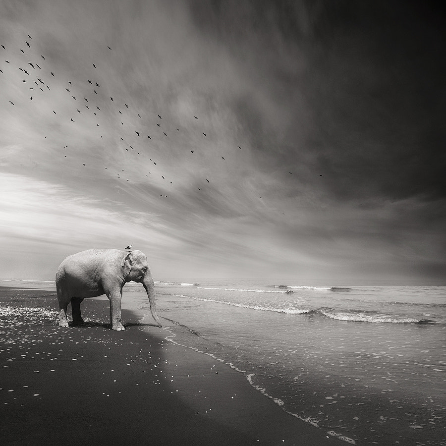 The Journey Home - Part One by Sherry Akrami on 500px.com