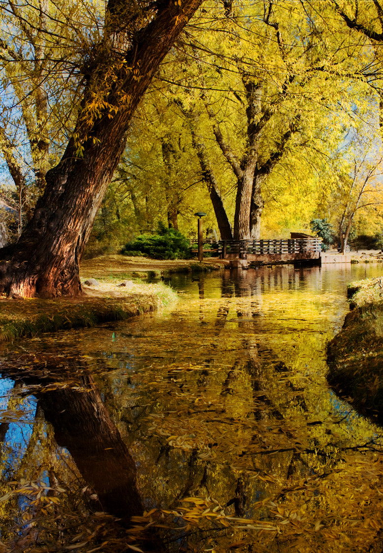 Photograph Fall Reflections by Ronda Kimbrow on 500px