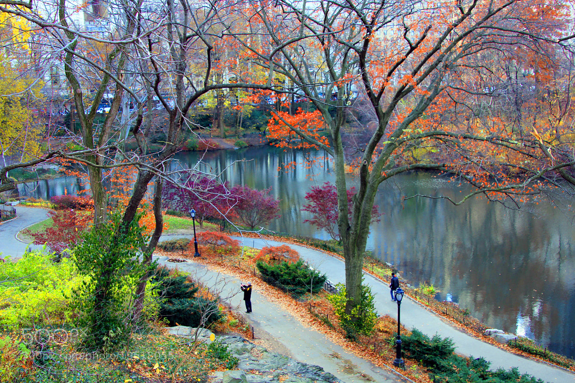 Photograph Autumn in Central Park, New York City by Papo Mena on 500px