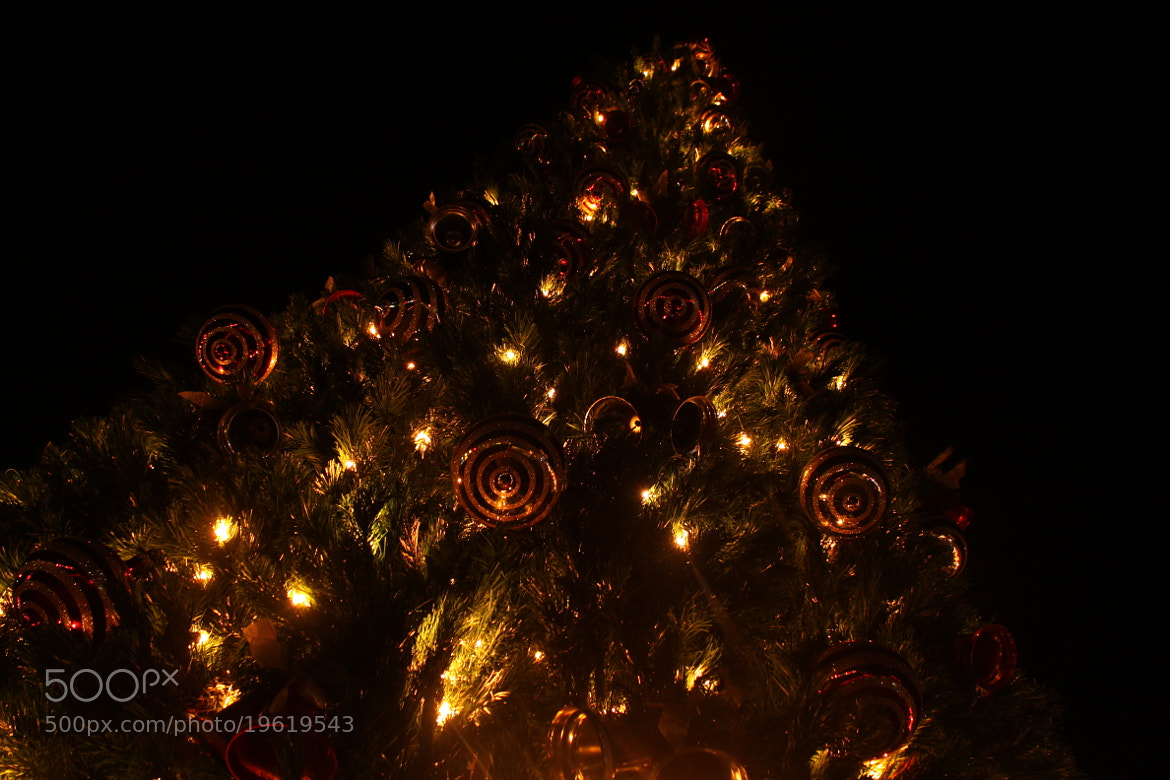 Photograph Christmas Time is Near by Kaylee Walding on 500px