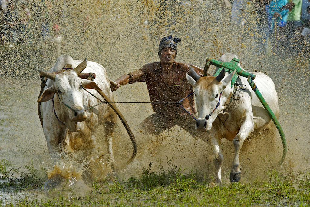 Photograph Bull Racing by CK NG on 500px