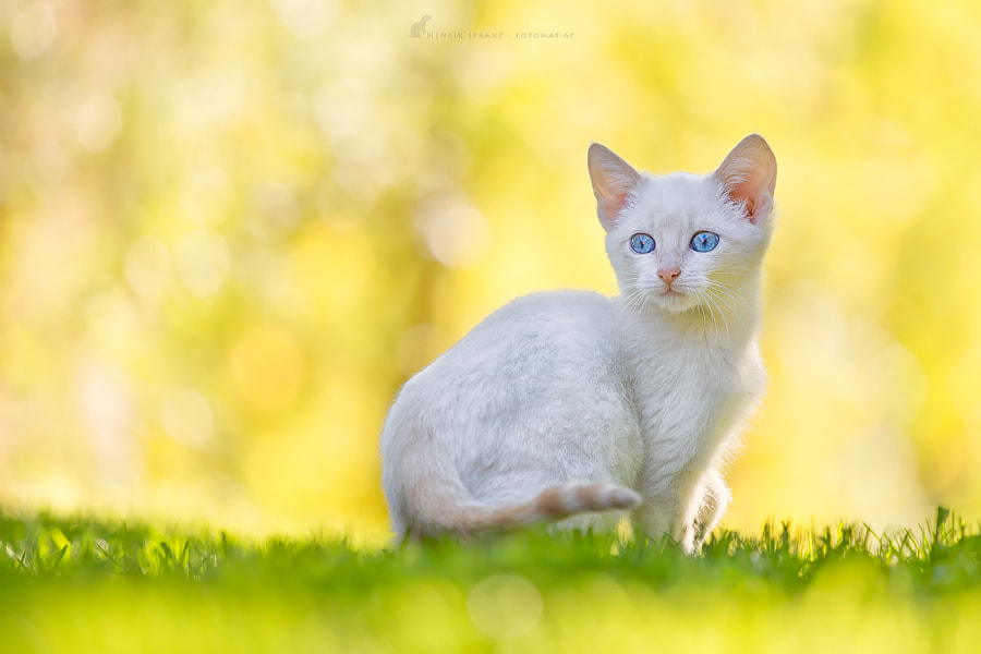 ~ Light, Bokeh, Kitten ~