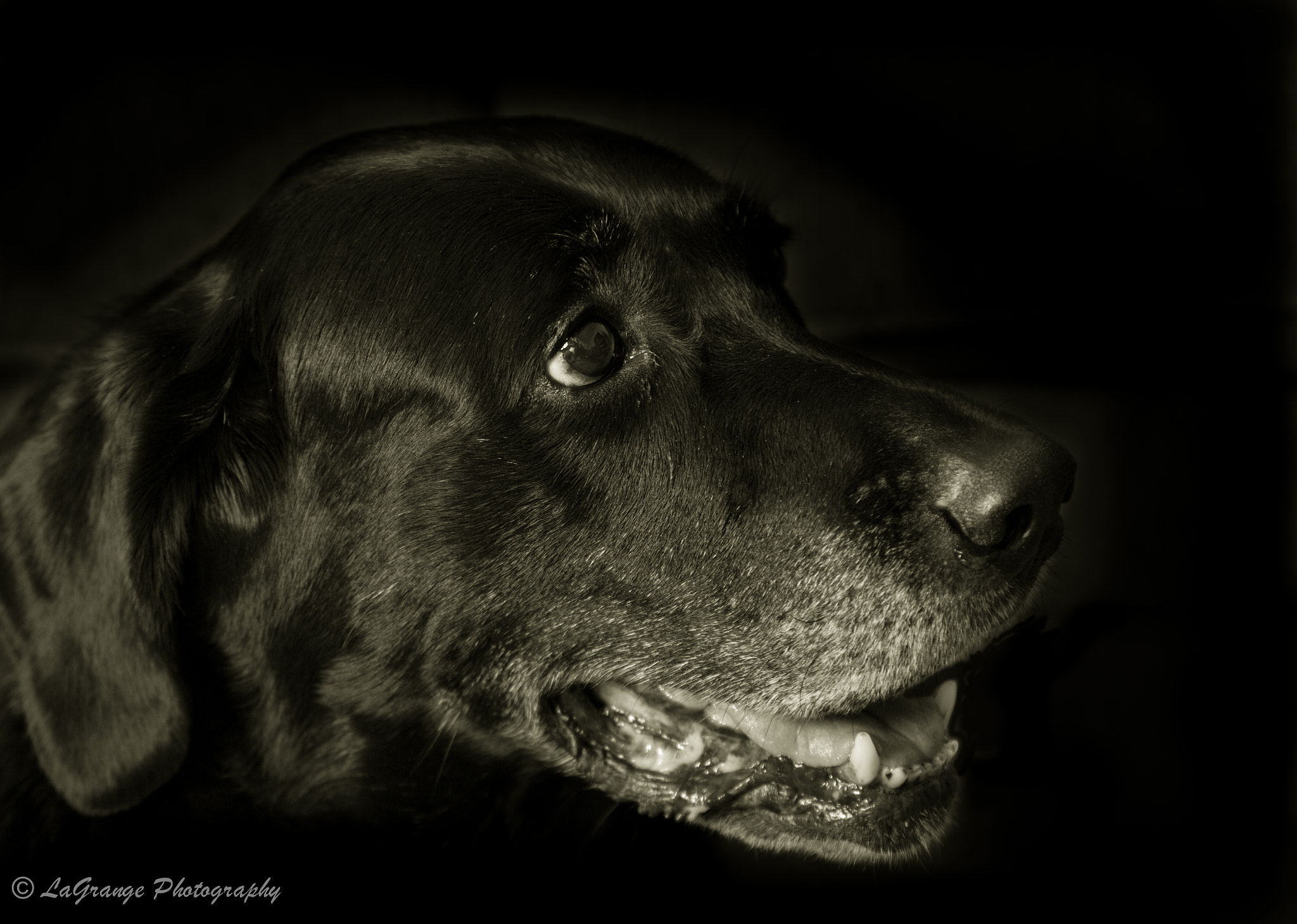 Photograph Old Dog by Michael LaGrange on 500px