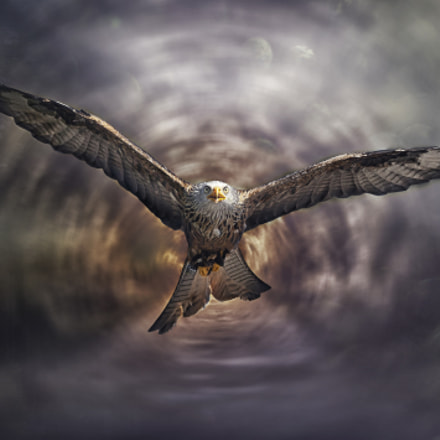 Red kite Composition