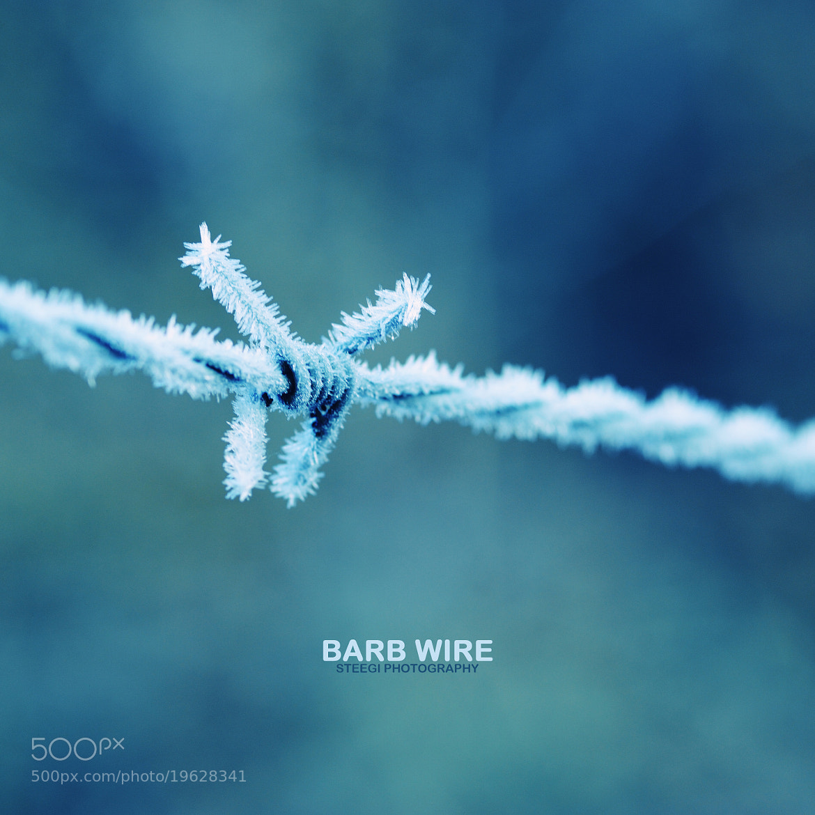Photograph Barb Wire by Andreas Steegmann on 500px