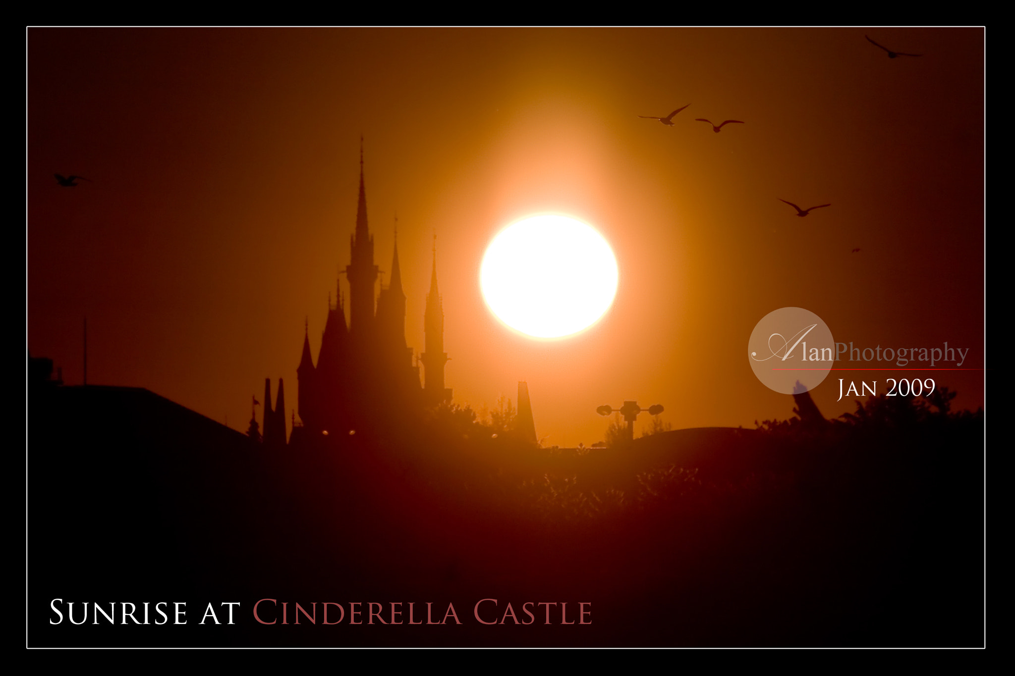 Photograph Sunrise at Cinderella Castle by Alan Nee on 500px