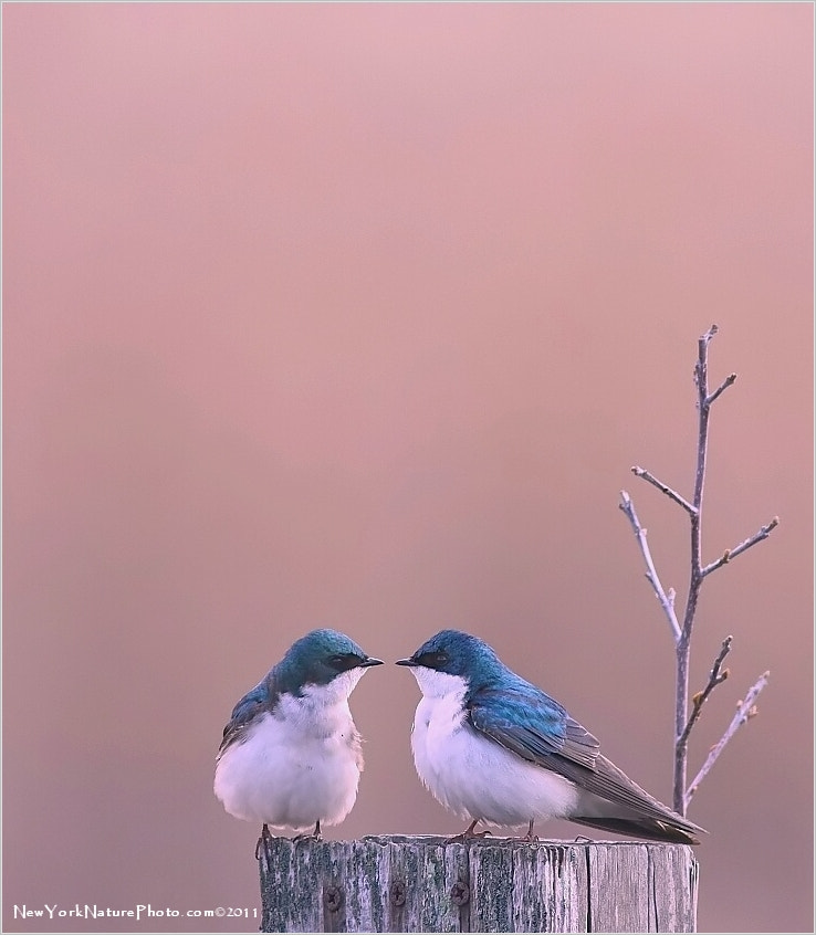 Photograph Birds in Love by Eddie Yu on 500px