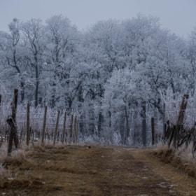 Photograph winterWonderland by Lukas Bachschwell