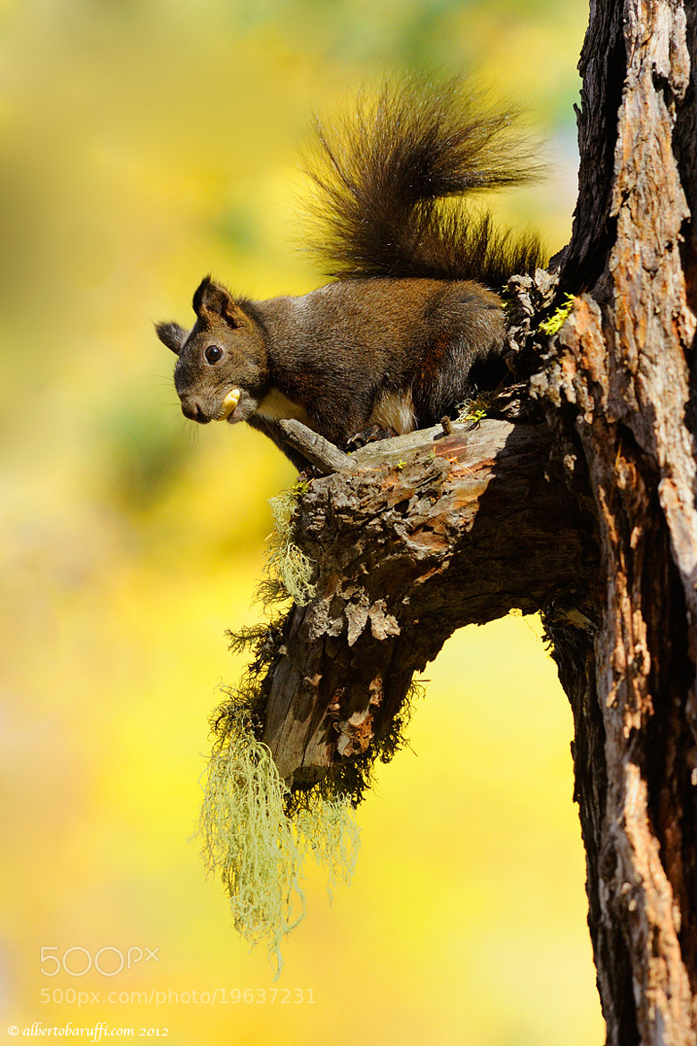 Photograph Hungry squirrel by Alberto Baruffi on 500px