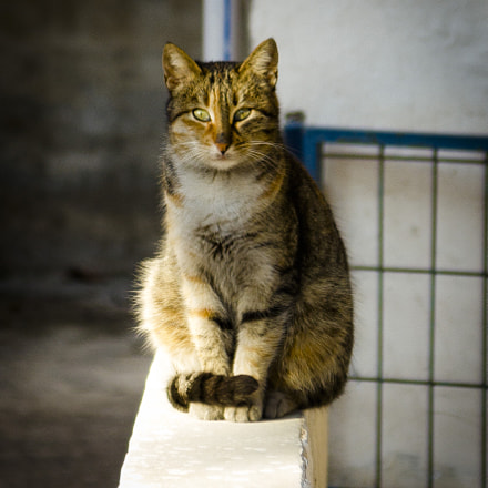 Sitting Cat, Canon EOS 550D, Canon EF 35-105mm f/4.5-5.6 USM