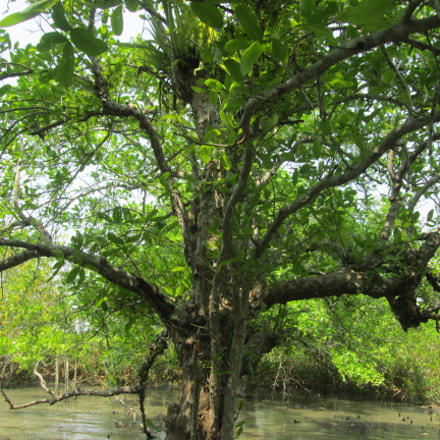 Largest Mangrove forest, Canon POWERSHOT A3400 IS