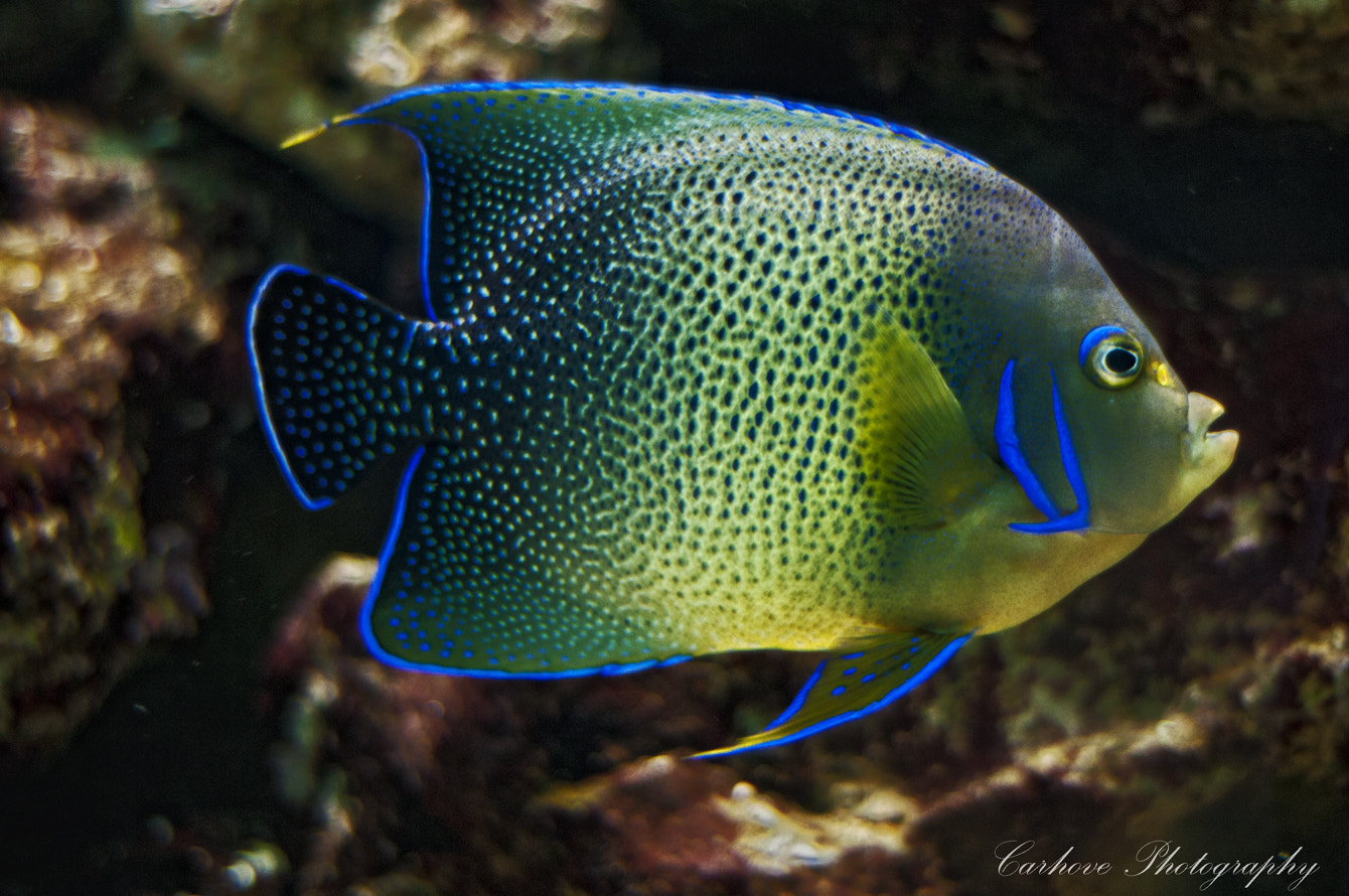 Photograph Fish by Carlos  on 500px