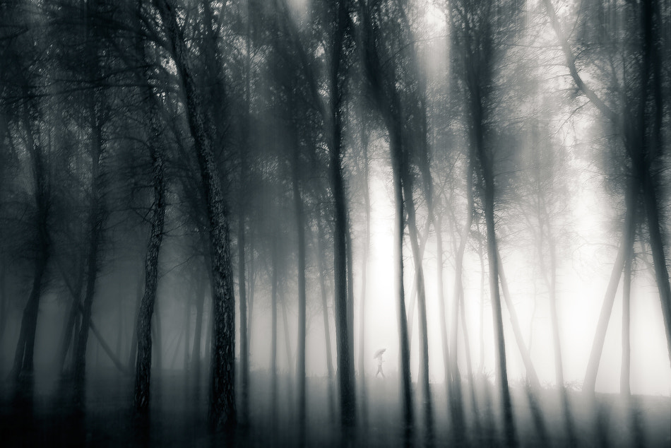 Photograph Misty forest II by Jose Beut on 500px