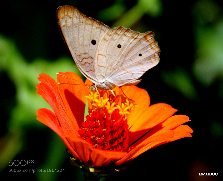Photograph White wings by Enaldo Ribeiro on 500px