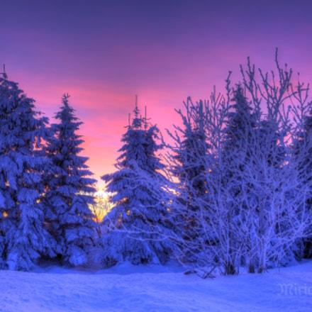 Dramatik schneebedeckter Fichten vor Wolkenglut