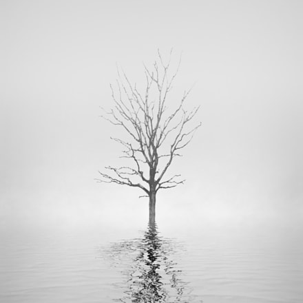 Lonely tree II, Pentax K-30
