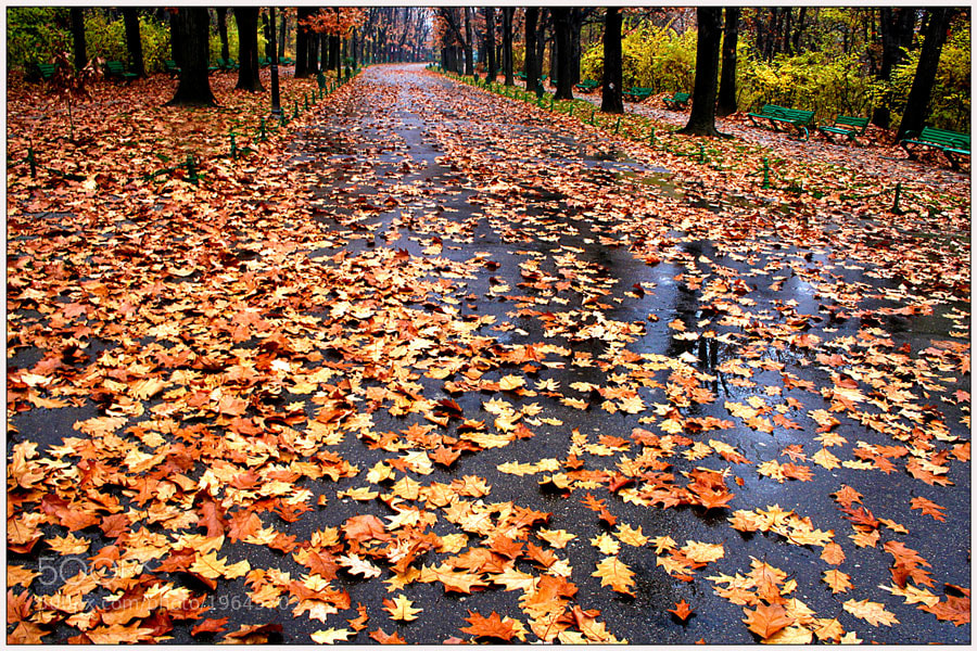 Photograph The end of Autumn by Stefan Andronache on 500px