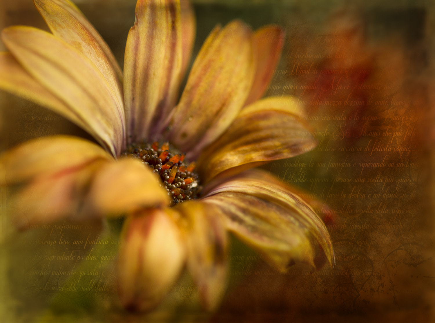 Photograph Winter flower by Mark Tizard on 500px