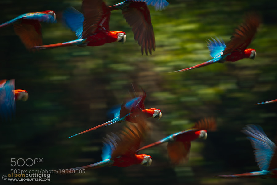 Photograph Rainbow Commute by Alison Buttigieg on 500px