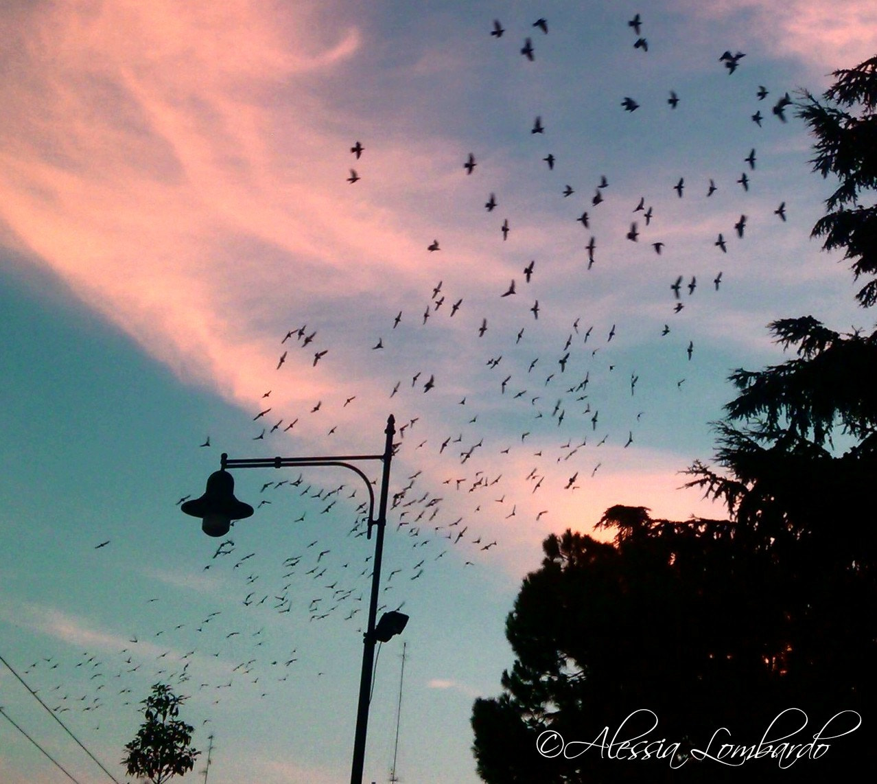 Photograph 'FLY'. by Alessia Lombardo on 500px