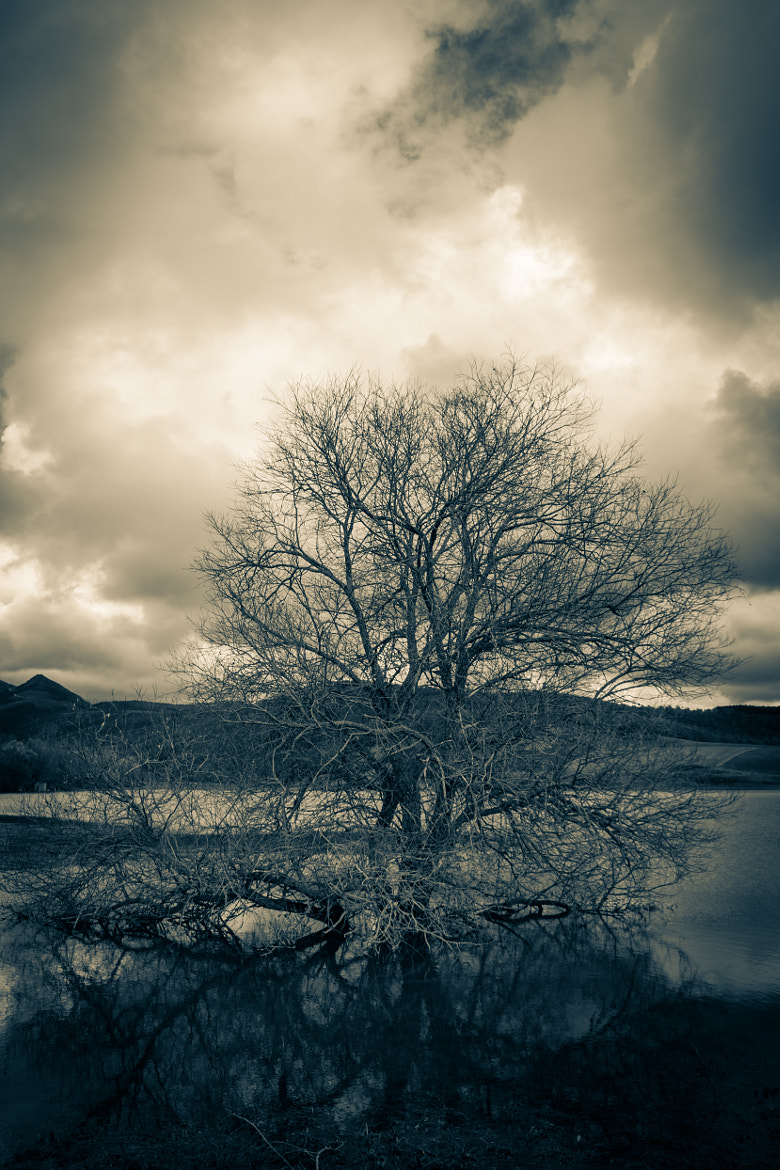 Photograph Tree in the water by Elisa Bistocchi on 500px
