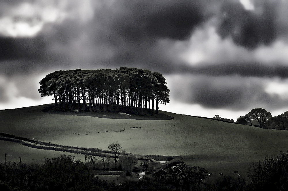 Photograph Hill top trees by Richard Tierney on 500px