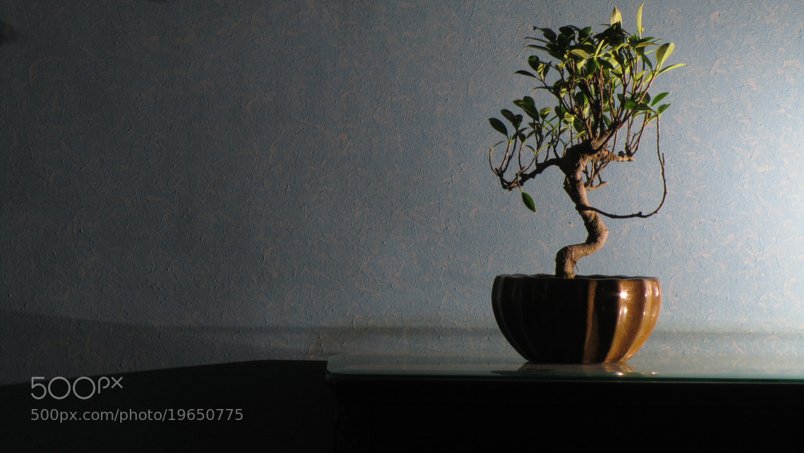 Photograph bonsai by Puneet Joshi on 500px