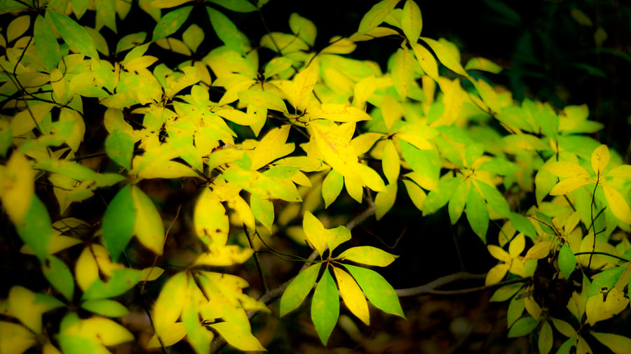 Photograph December Color  by Yuji Nishimura on 500px