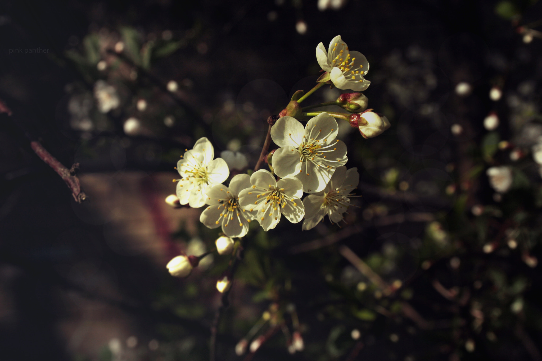 Photograph some flowers by lolita folk on 500px