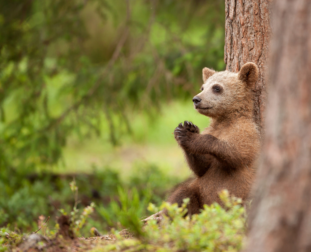 Photograph Lonely Cub by Giedrius Stakauskas on 500px