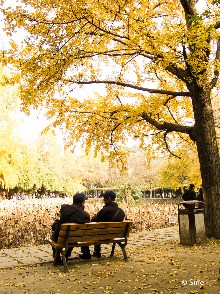 Photograph Yellow Autumn (3) by Sine Shem on 500px