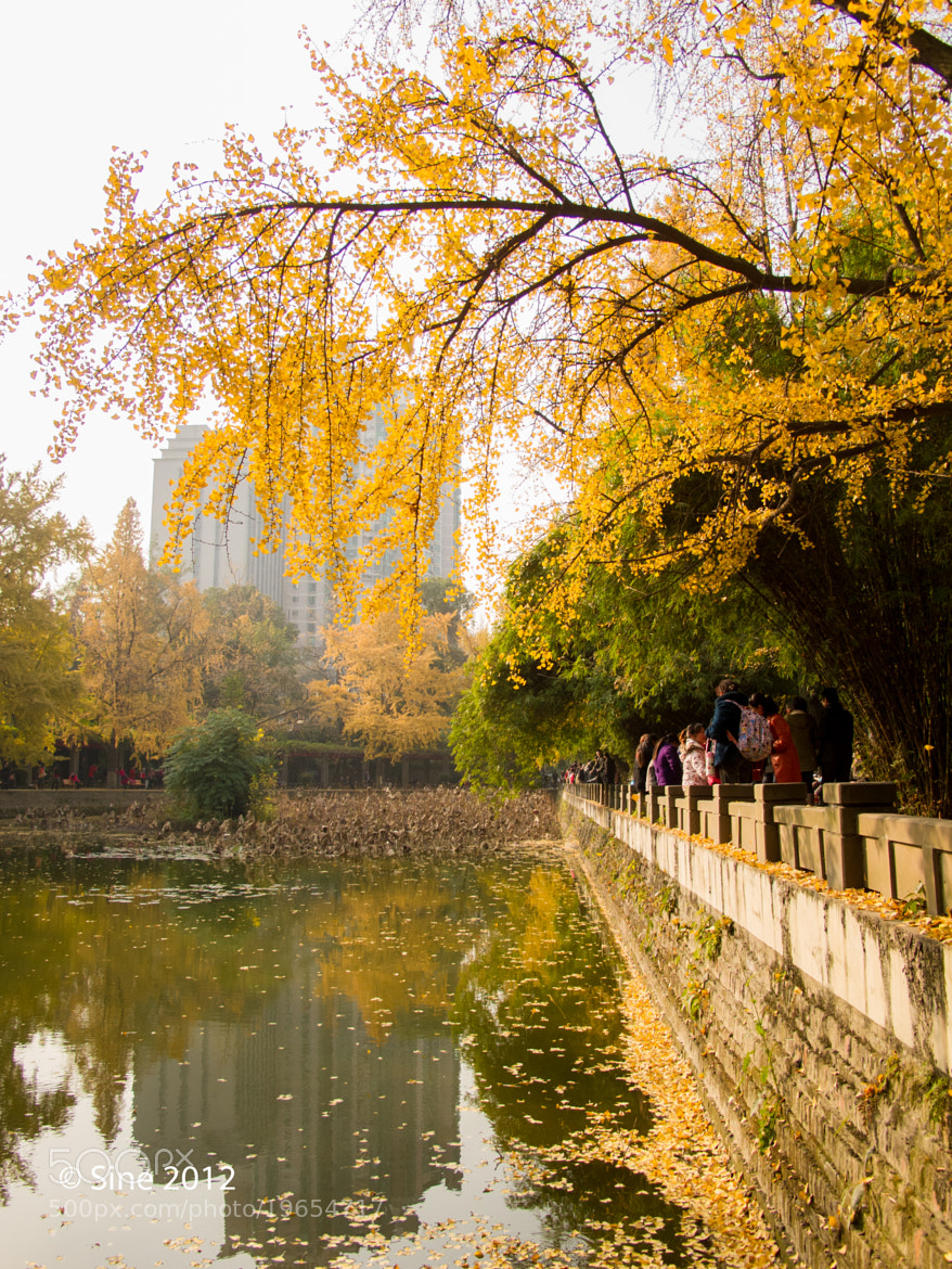 Photograph Yellow Autumn (6) by Sine Shem on 500px