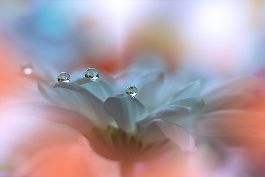 """<""><"">"" by Juliana Nan on 500px.com"