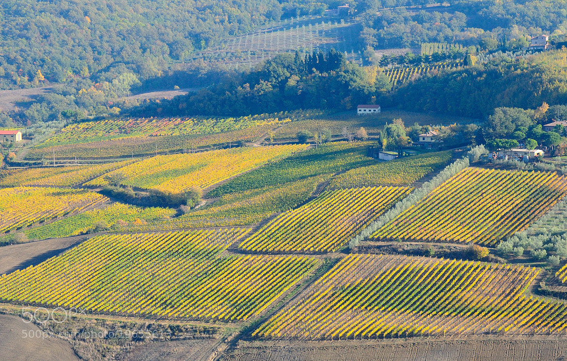 Photograph Autumn Time: vineyards of Montepulciano... by Renato Pantini on 500px