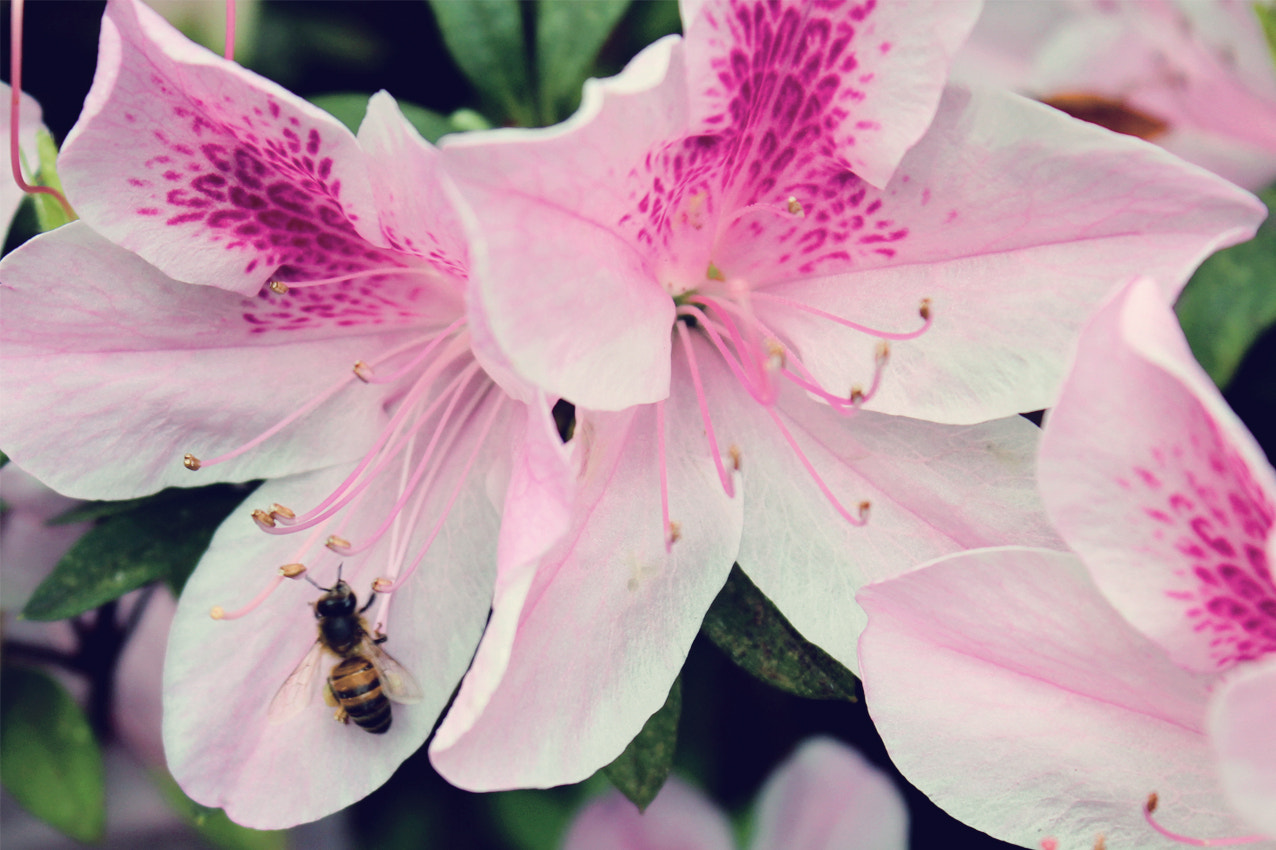 Photograph Bee on flower by Ricardo Würges on 500px