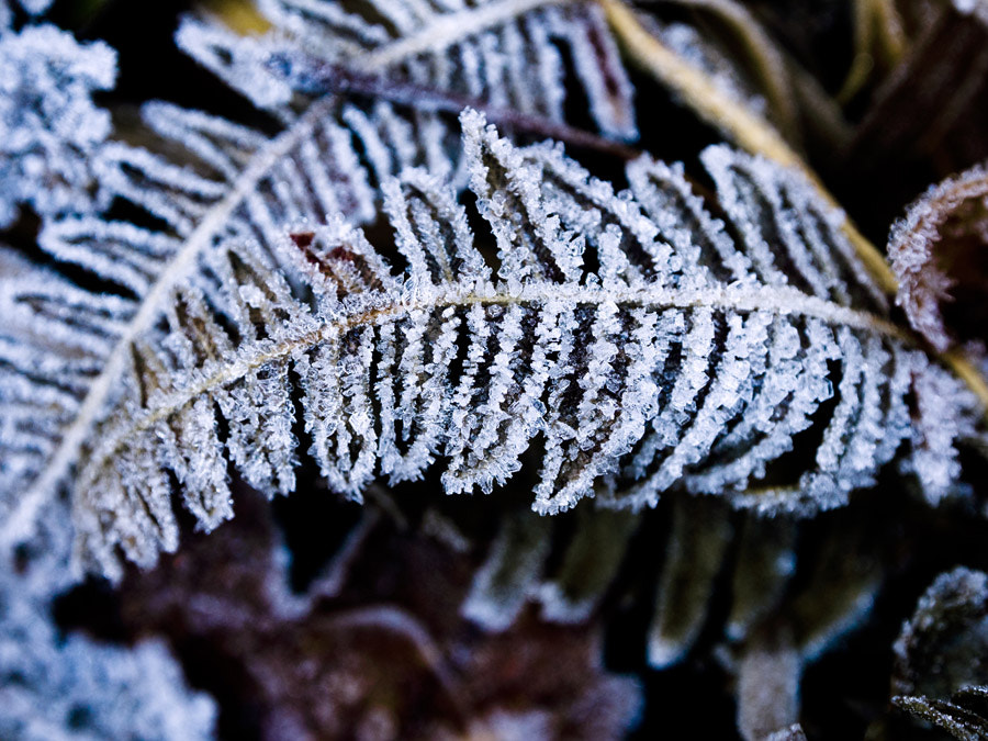 Photograph Frost by Lei (Mary) Lei on 500px