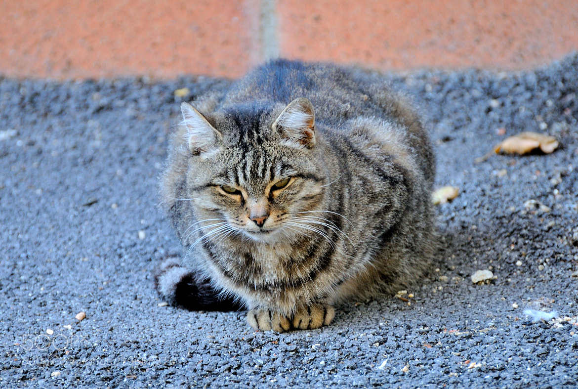 Photograph Another Cat from Montepulciano... by Renato Pantini on 500px