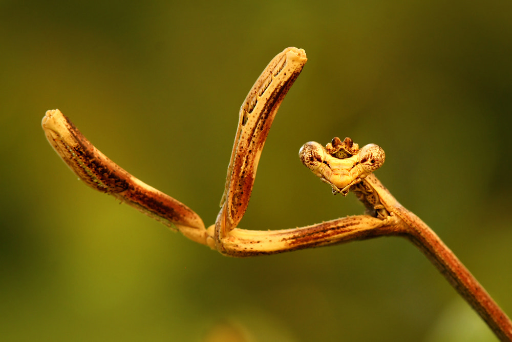 Photograph Dancing Mantis by Jenny Theobald on 500px