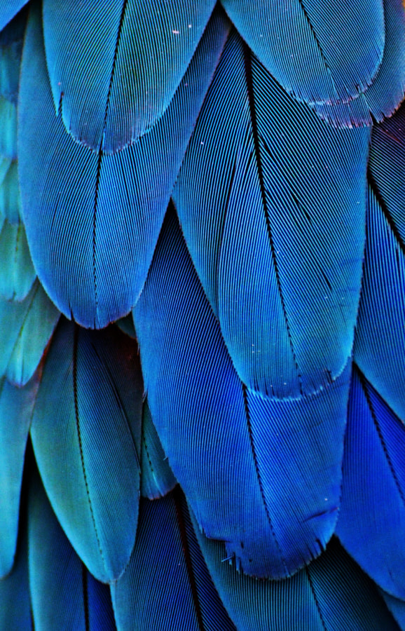 Feathers (Blue) by Michael Fitzsimmons on 500px.com