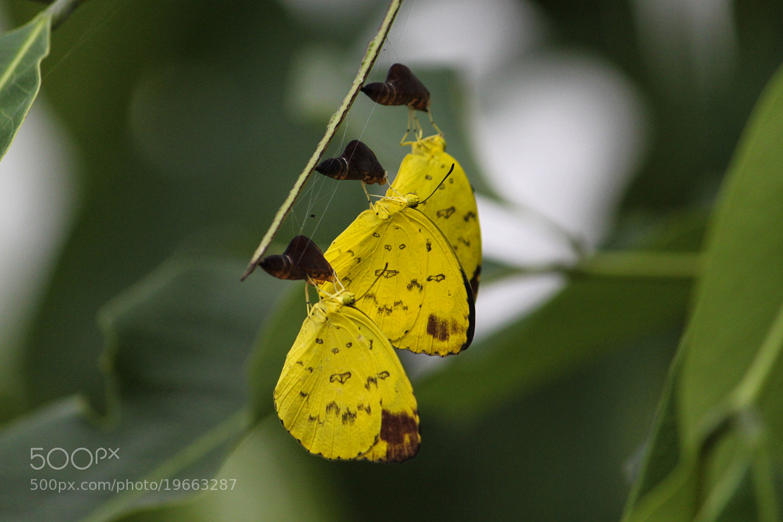 Photograph Life Begins on Golden Shower by Ravi Meghani on 500px