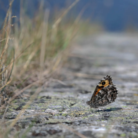 Grayling, Canon EOS 5D MARK III, Canon EF 35-70mm f/3.5-4.5