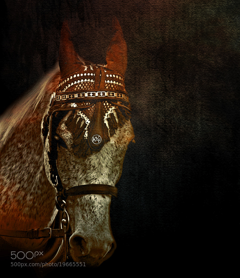 Photograph The horse by Duilio Pianelli on 500px